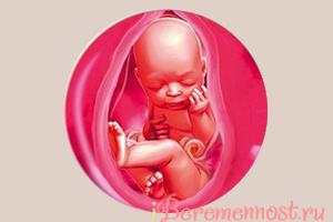 что происходит с малышом на 35 неделе беременности