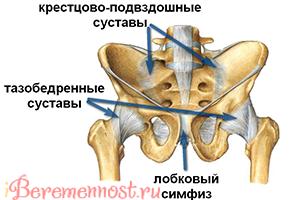 болит при беременности лобковая кость